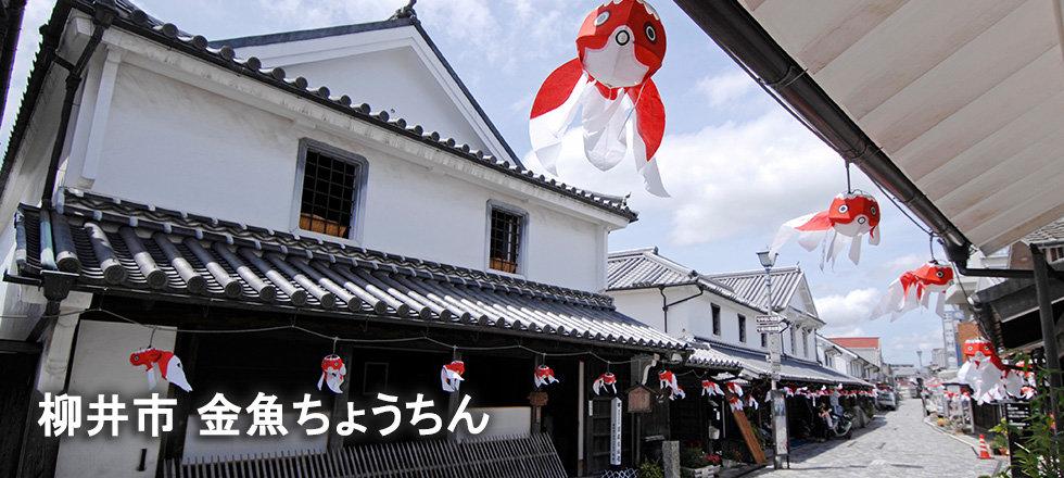 夏_柳井市_金魚ちょうちん